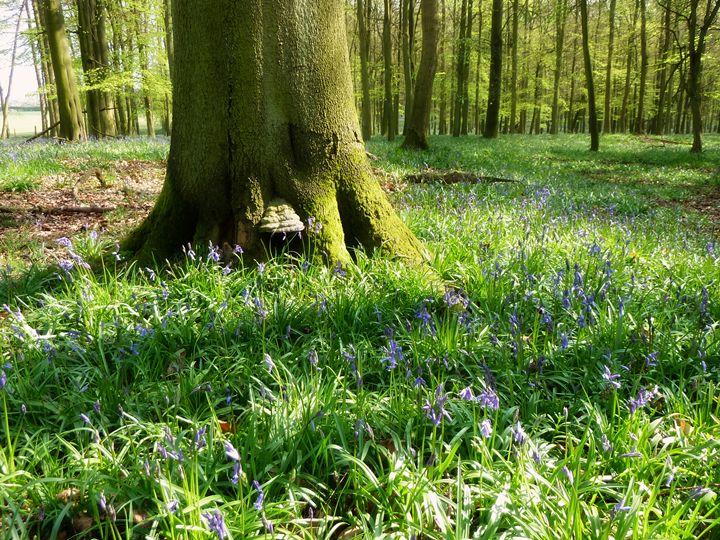 Ashridge Estate Dockey Woods - A Beautiful World