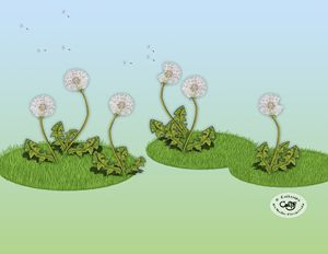 The Dandelion Puffs - Illustration by Cat