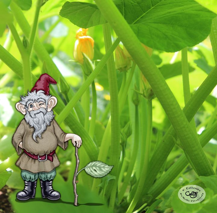 Gnome in the Squash - Illustration by Cat
