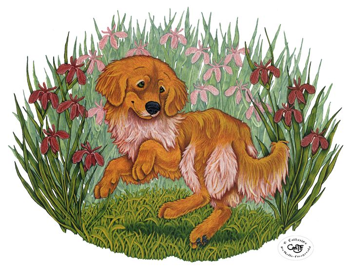 Golden & Irises - Illustration by Cat