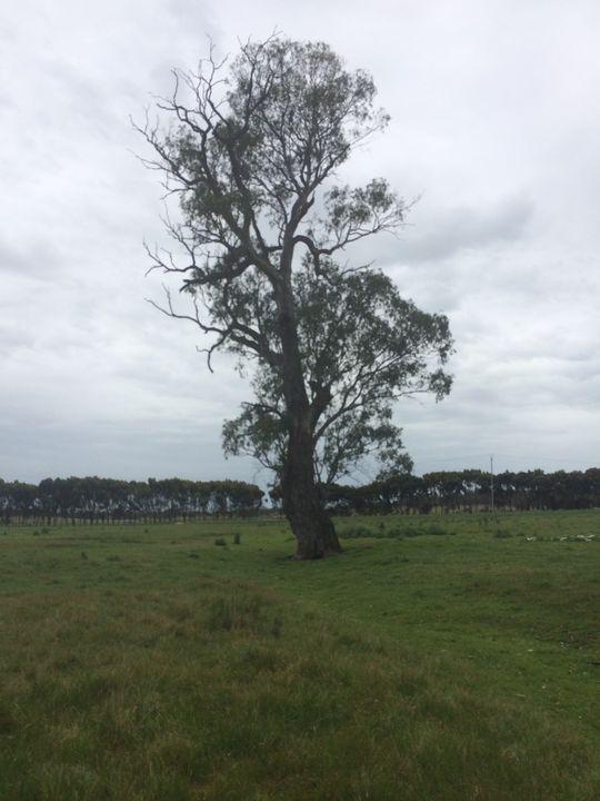 100 year old tree - Photobooth