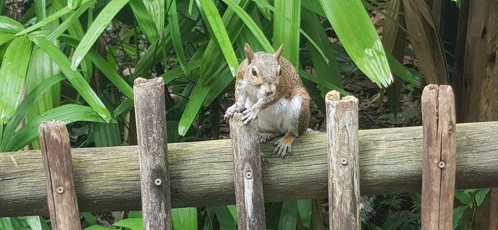 Happy Squirrel - Couper Creations