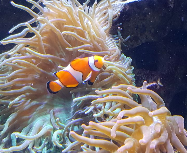 Finding Nemo - Couper Creations