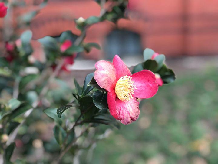 Smithsonian Flower - Suzan Ok