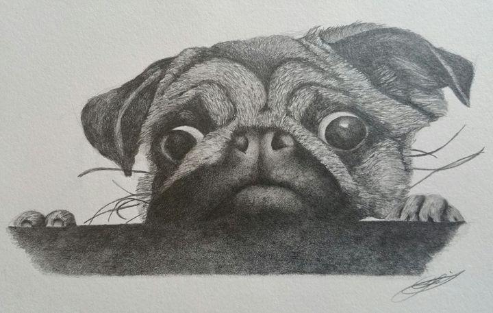 Pug - Lloyd39