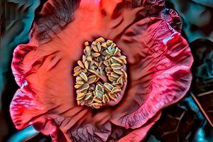 Dark Camellia