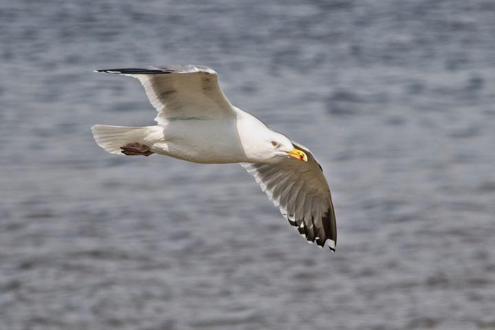 Seagull - Impressions