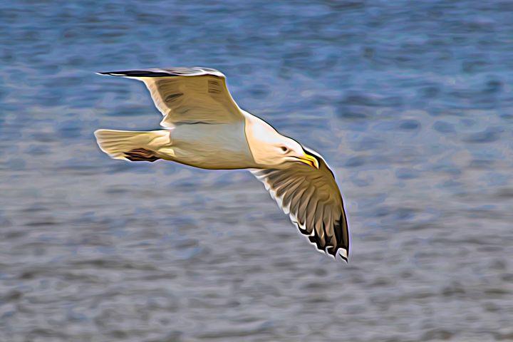 Seagull Soaring - Impressions