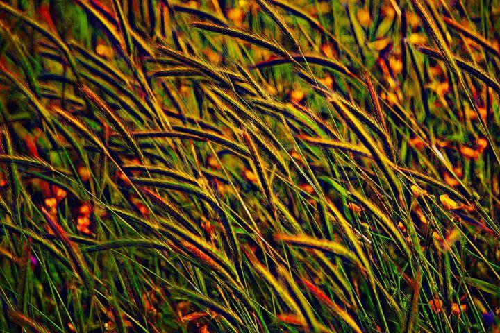 Windswept Grasses - Color Contrast - Impressions
