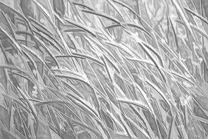 Windswept Grasses in Gray & White