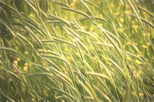 Windswept Grasses - Soft Painterly