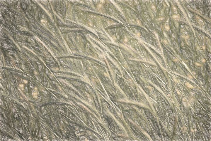 Windswept Grasses - Sketch Style - Impressions