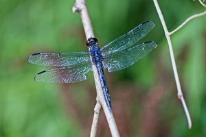 Dragonfly 4