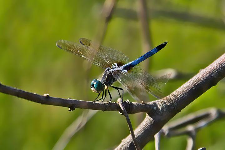 Dragonfly 13 - Impressions