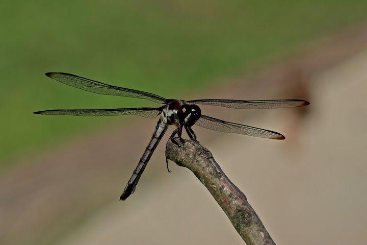 Dragonfly 10 - Impressions
