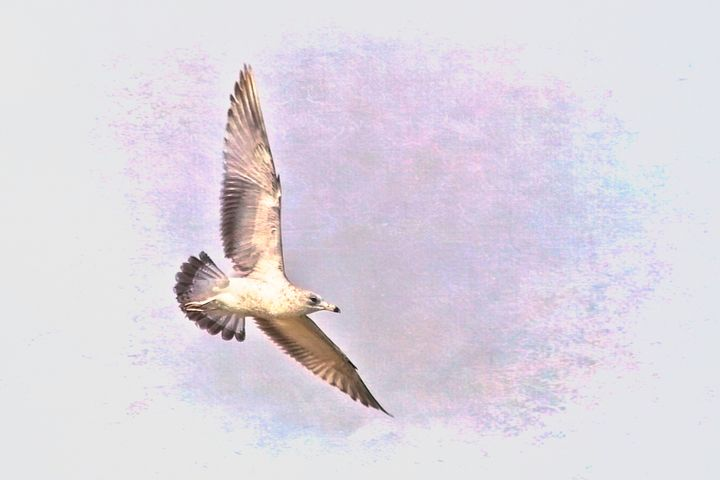 Seagull Wings Spread - Impressions