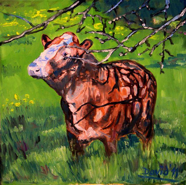 YOUNG BULL - davidschab gallery
