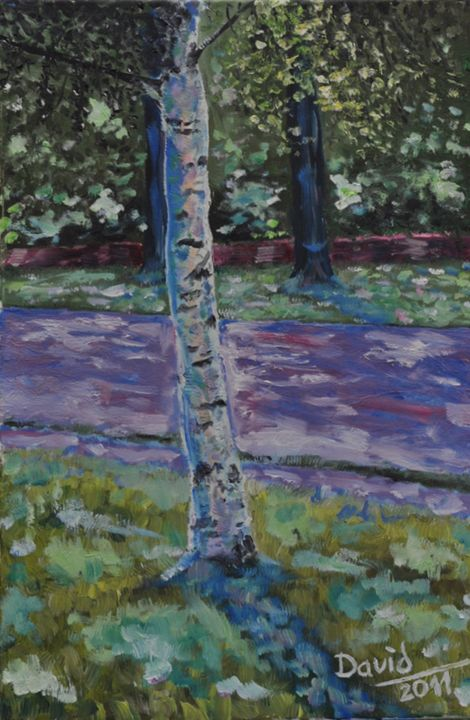 BIRCH-TREE - davidschab gallery