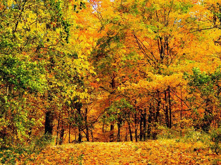 Autumn. - IIBXYENCEVRTX™