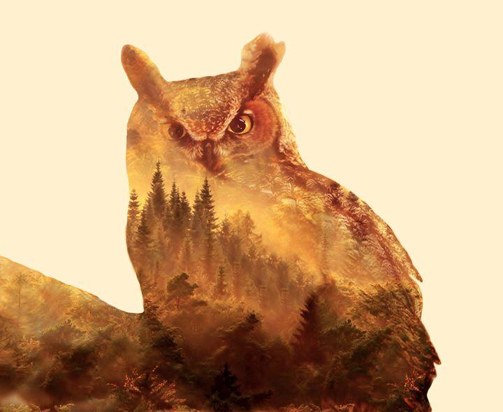 The Owl - sadaf