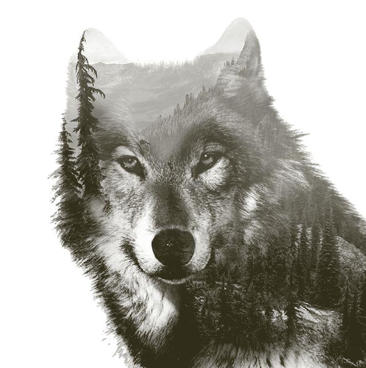 wolf - sadaf