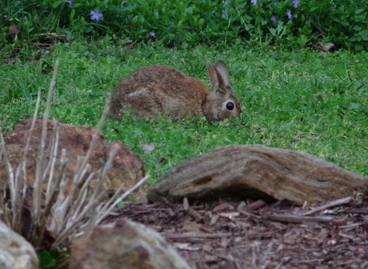 Wild Rabbit 2 - Creative  DP Artworks