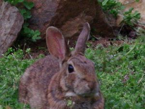 Wild Rabbit - Creative  DP Artworks
