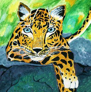 Amur Leopard (Critically Endangered)