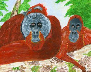 Sumatran Orangutan (Crit Endangered)