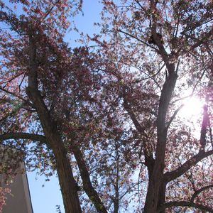 Flowering tree with sunlight