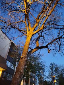 Tree in street light
