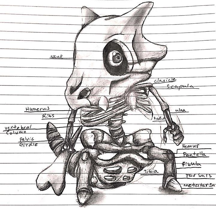 Pokemon anatomy (skeleton) - Griffuri