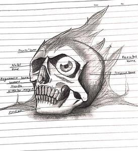 Pokemon anatomy (skull)