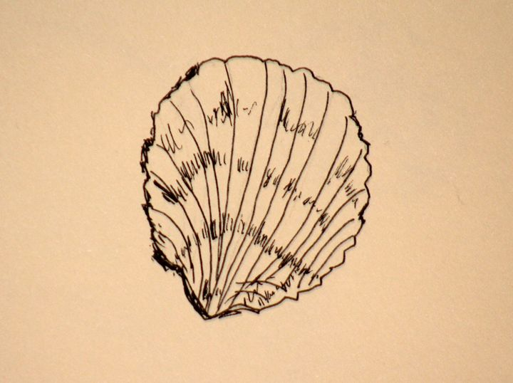 Basic Shell - Paintings by Liz