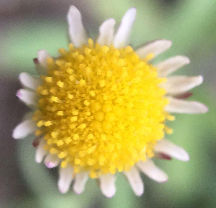 Flower 12 - Temple