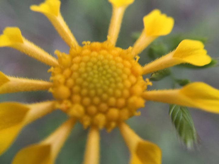 Flower 11 - Temple