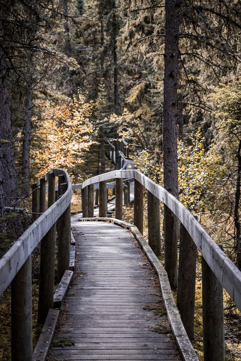 Boardwalk - Captured by Kat Photography