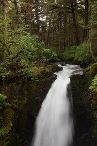Saw Mill Waterfall