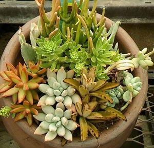 A Succulent Bunch - Flanexism