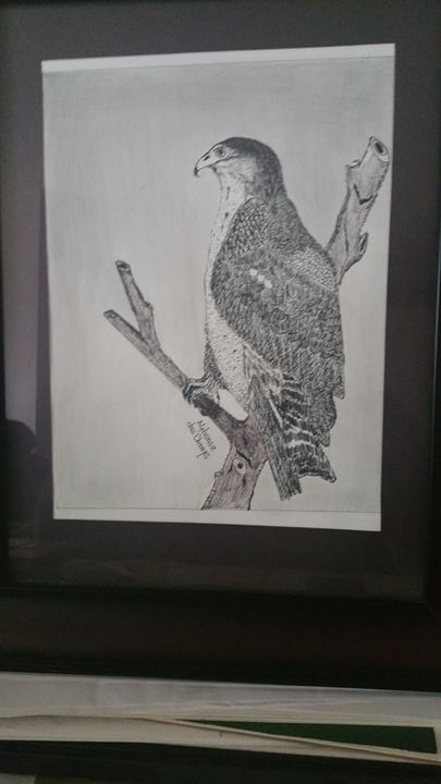 LE PETIT EAGLE AFRICAIN - AKAlphonse