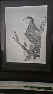 LE PETIT EAGLE AFRICAIN