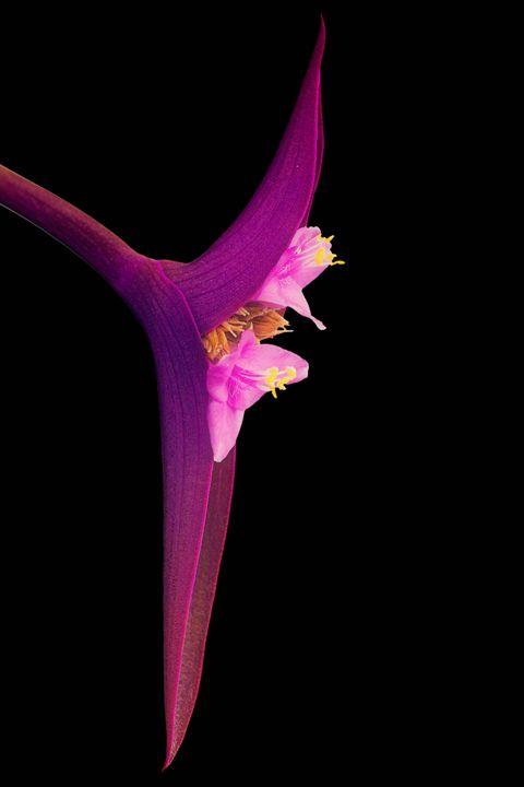 Just Flower - forwallandsoul