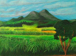 Philippine sugarcane field