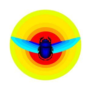 Scarab Beetle - Elonium