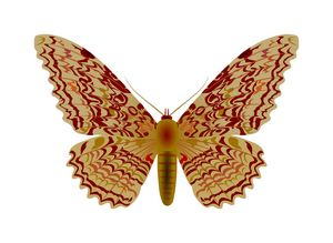 Giant tropical moth