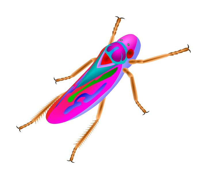 Leafhopper - Elonium
