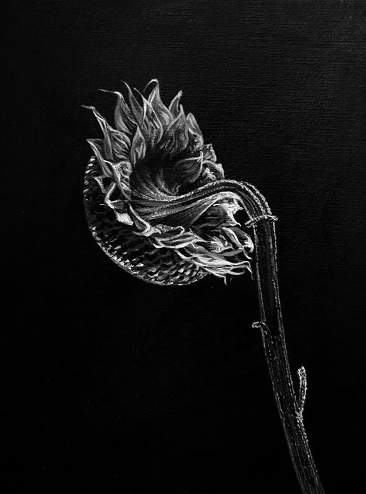black&white sunflower - tamagoshi