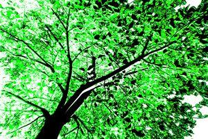 Green Foliage - Farrell Art