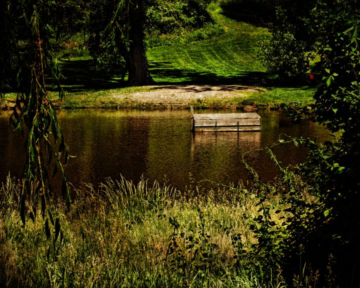 Hidden Silence - Pine Singer Photographic Art