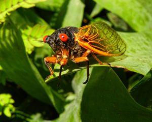 Rebirth of the Cicada - Pine Singer Photographic Art